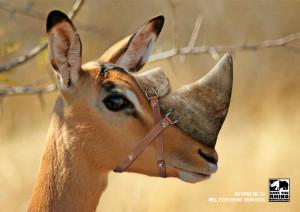 WWF - Rhino ad campaign